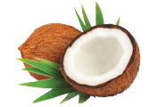 Coconut-Aminos-Food-Icon