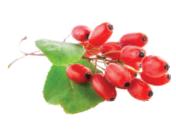 Goji-Fruit